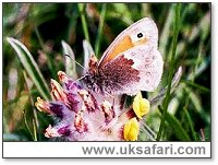 Small Heath Butterfly - Photo � Copyright 2001 Gary Bradley