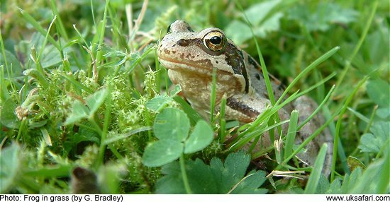 frog on land