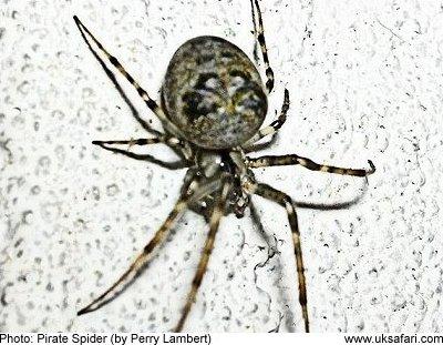 Spider Breeds Uk - Garden Design Ideas