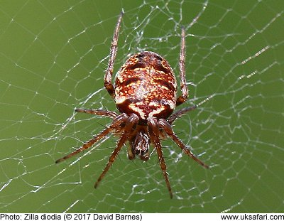 how to stop false widow spiders coming in the house